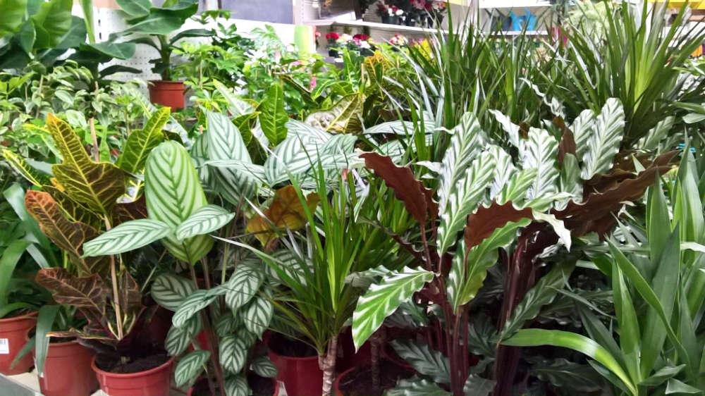 Les plantes d'intérieur de la jardinerie Une saison au jardin