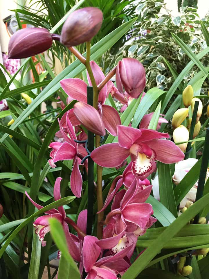 Les orchidées de la jardinerie Une saison au jardin