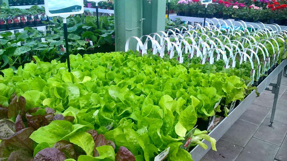 Les plants potagers de la jardinerie Une saison au jardin