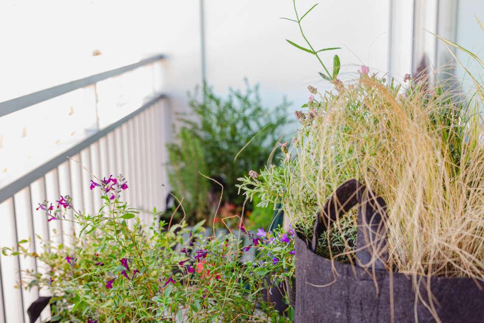 Les plantes de producteur dénichées par Un Balcon en Ville