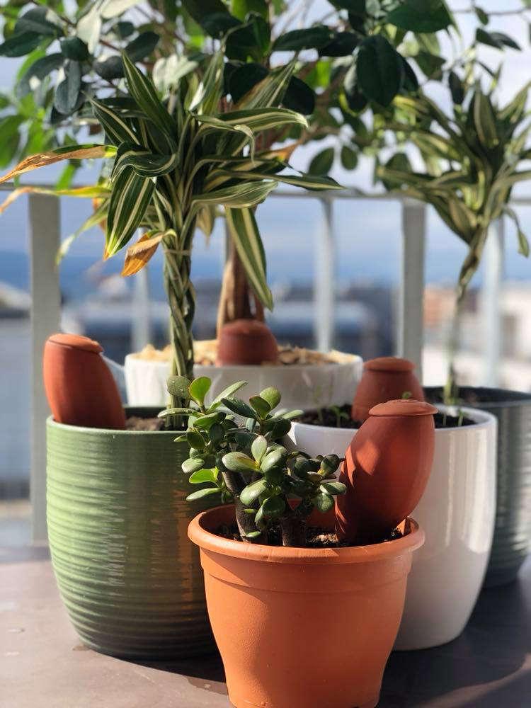 Ollas Wepot dans jardinières