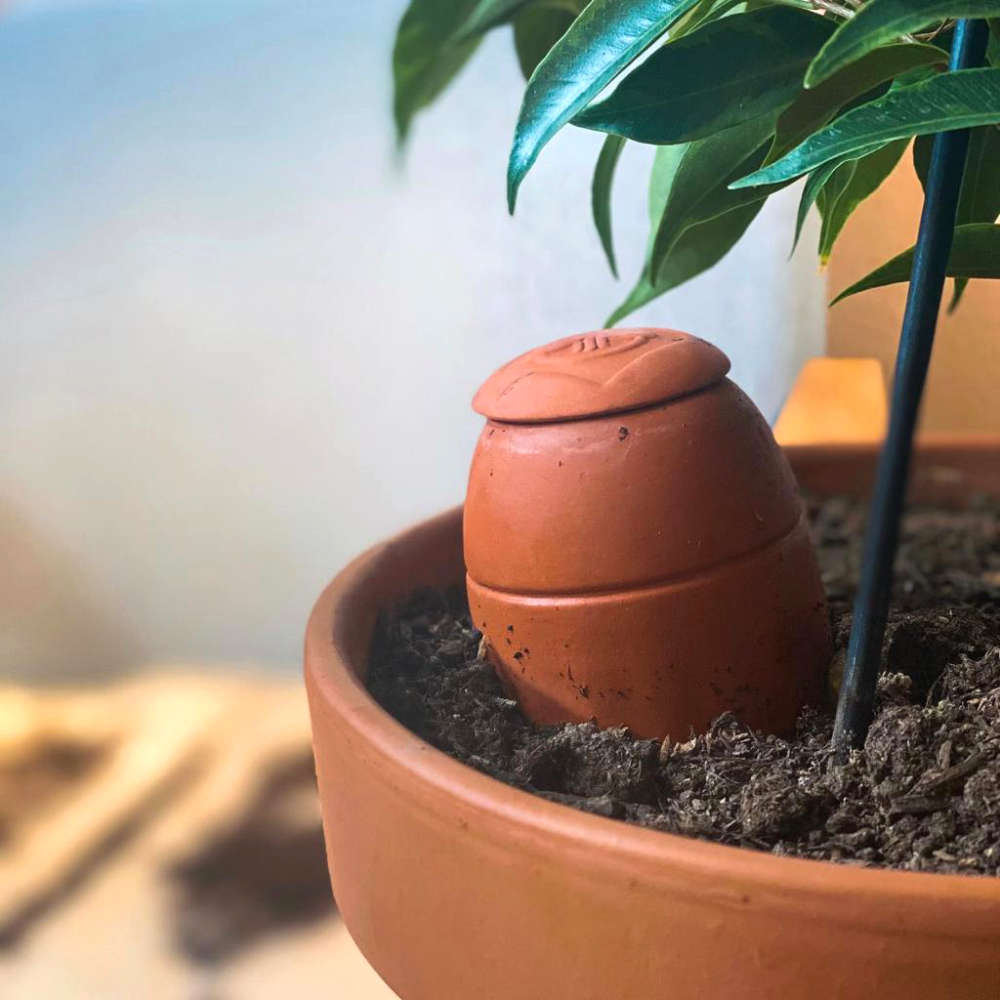 Ollas Wepot dans pot de fleurs