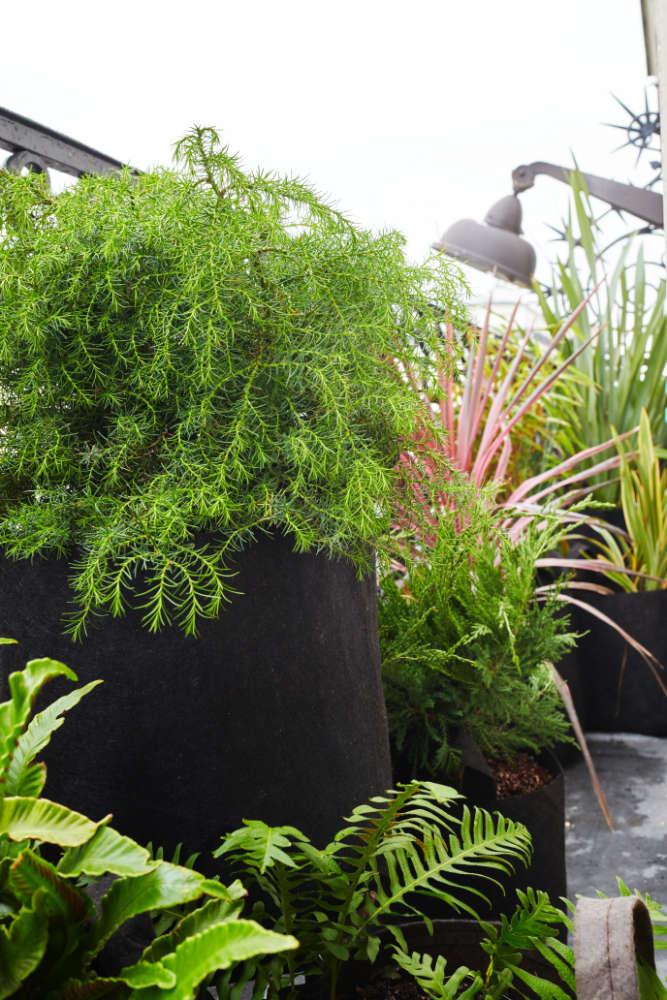 Un paysage végétal en ville