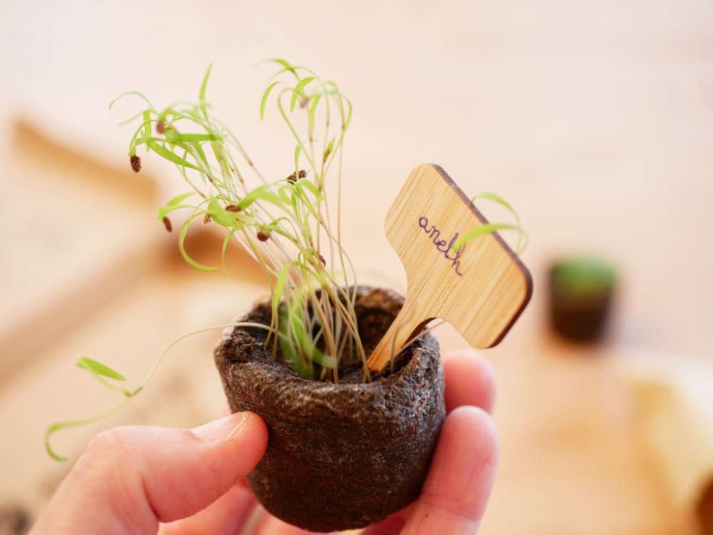 Les graines bio et reproductibles des box Menthe et Primevère