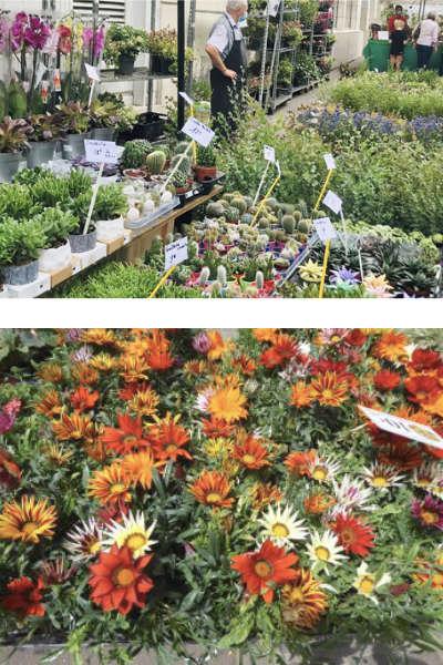 Le marché aux fleurs de Montreuil